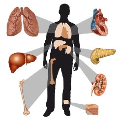 organ-transplants